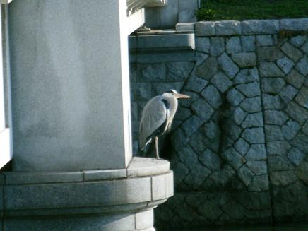 平和公園鳥.jpg